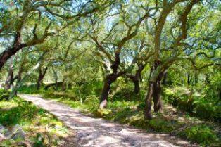 Algarve mit Korkbäumen