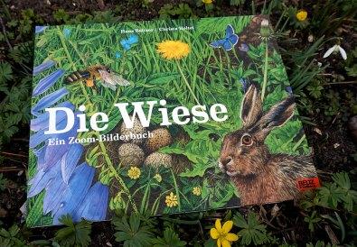 Die Wiese - Bilderbuch für Kinder