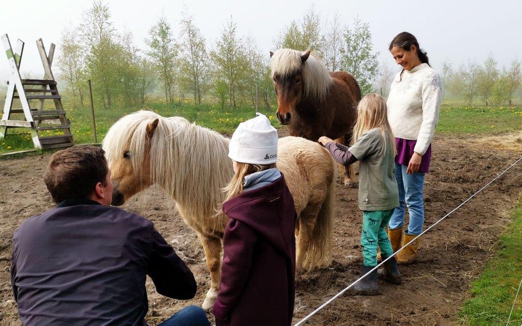 Freilerner-Gemeinschaft auf Bornholm, Pferde streicheln und Bürsten bei Eliane