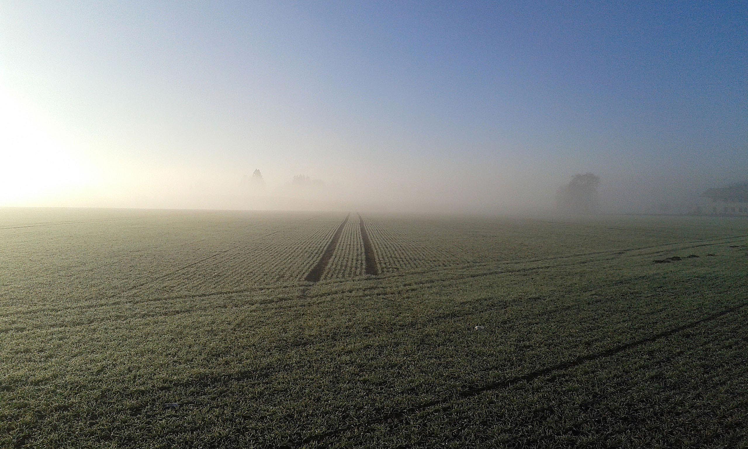 nebel03