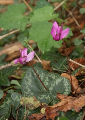 Bella Ciao - im Schatten der kleinen Blume
