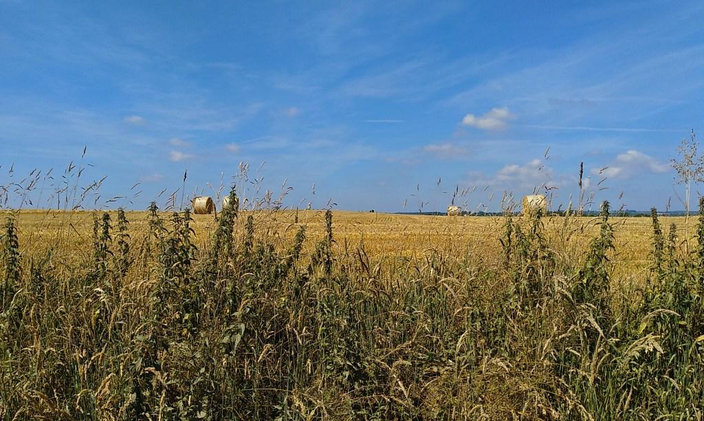 Getreide-Ernte bei La Roche-Derrien