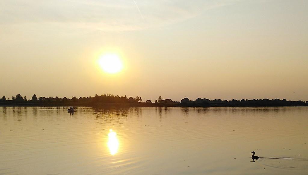 Ein Haubentaucher zieht seine Bahn vor dem Sonnenuntergang