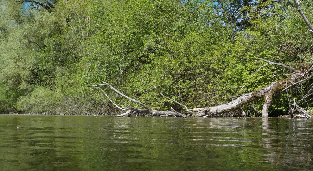Im Weiher. Totholz am Ufer