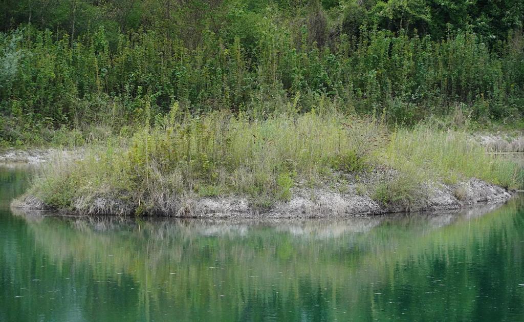 Kleine Insel inmitten der Kiesgrube