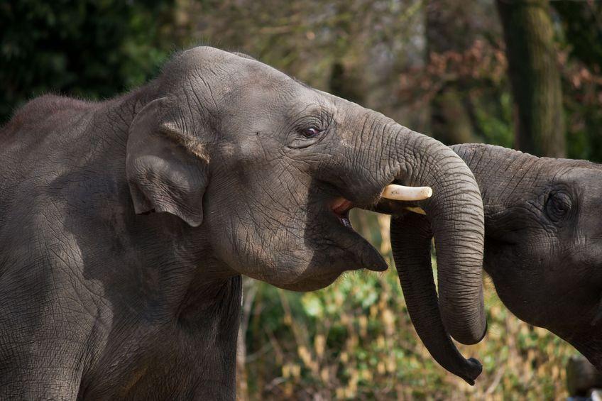 Kośc słoniowa