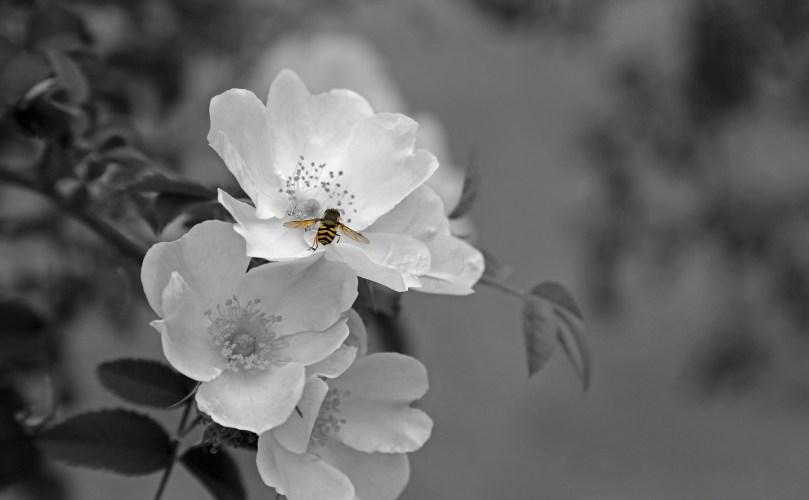 flower-659216