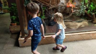 Besonderen Spaß haben die Kinder an einem kleinen Äffchen.