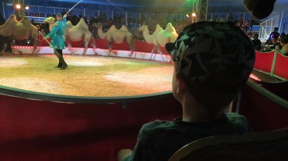 Die Show begann mit den Kamelen.
