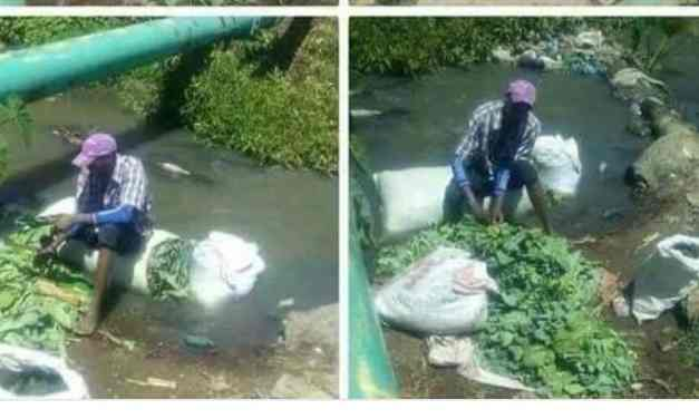 Pictures: Is this a Harare vendor washing vegetables in sewage water??