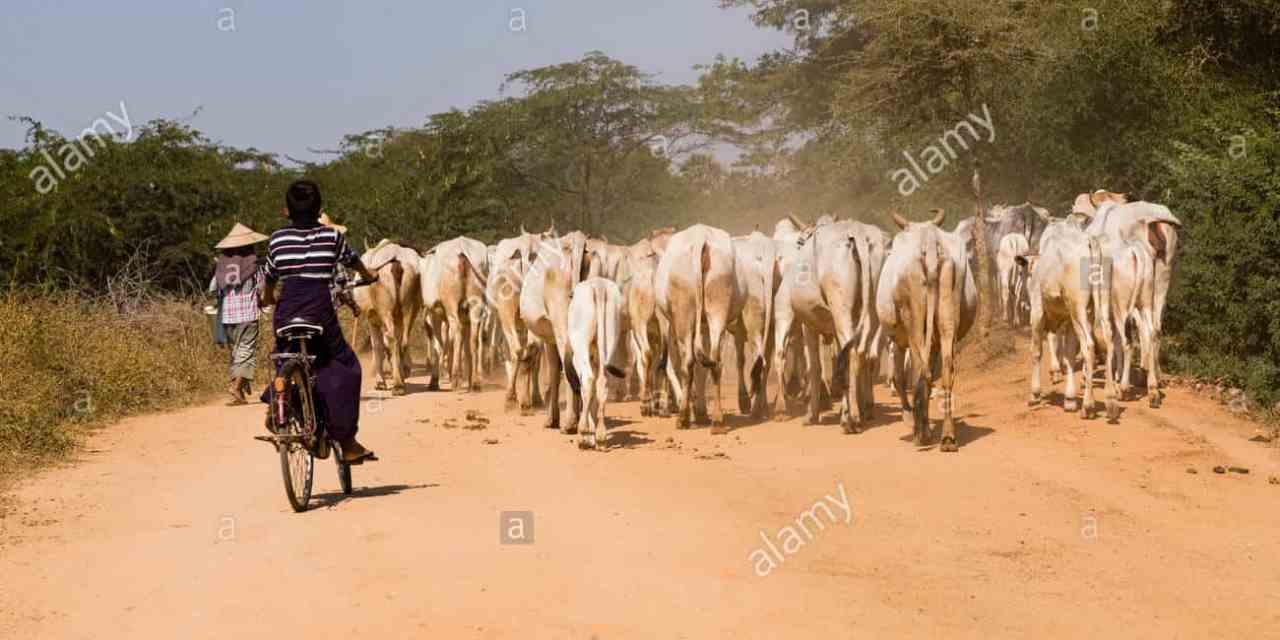 Masvingo herdboy Jailed 12 years for Bonking employer's Daughter