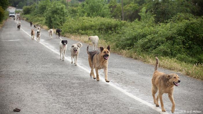 Stray dogs wreak havoc in Chipinge… We'll shoot them, says Council