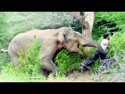 Elephant herd attack shrine, kill worshipper during night prayers