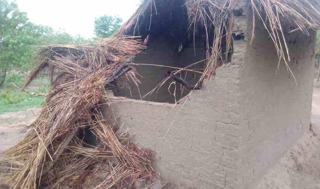 HUMAN WILDLIFE CONFLICT: Elephants leave trail of destruction in Kariba