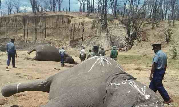 Save Valley Conservancy poaching bound suspects nabbed after public tip off