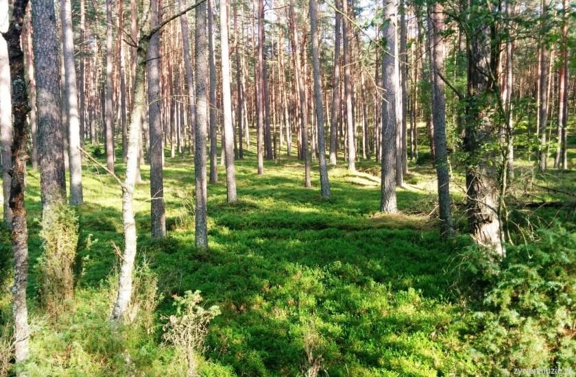 Rezerwat Bory Tucholskie