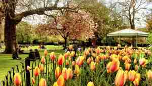 spring-in-ireland-images-stephens-green