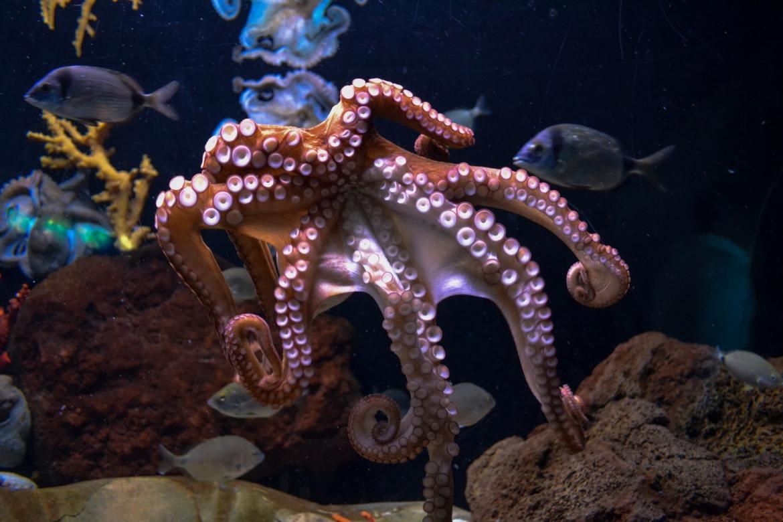 Oceanarium w barcelonie akwarium Co zwiedzic i zobaczyć w barcelonie w weekend