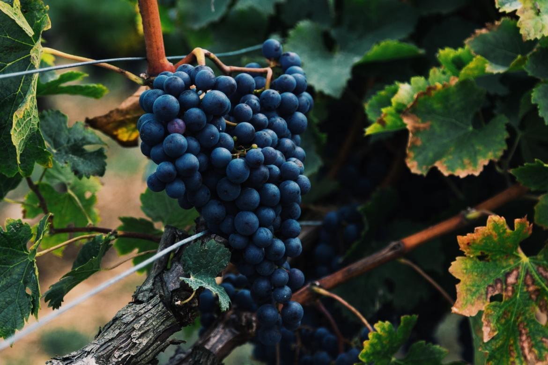 Wine road Gruzja co zwiedzić i zobaczyć w gruzji