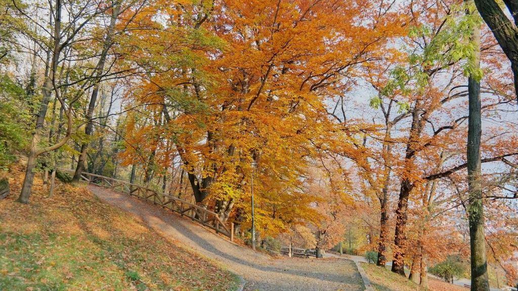 Pertin park drzewa co wiedzić w pradze co zobaczyć weekend w pradze