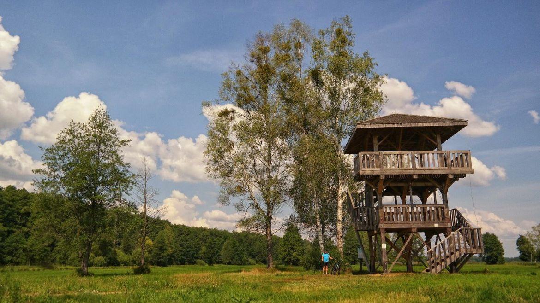 Wieża widokowa Białowieża