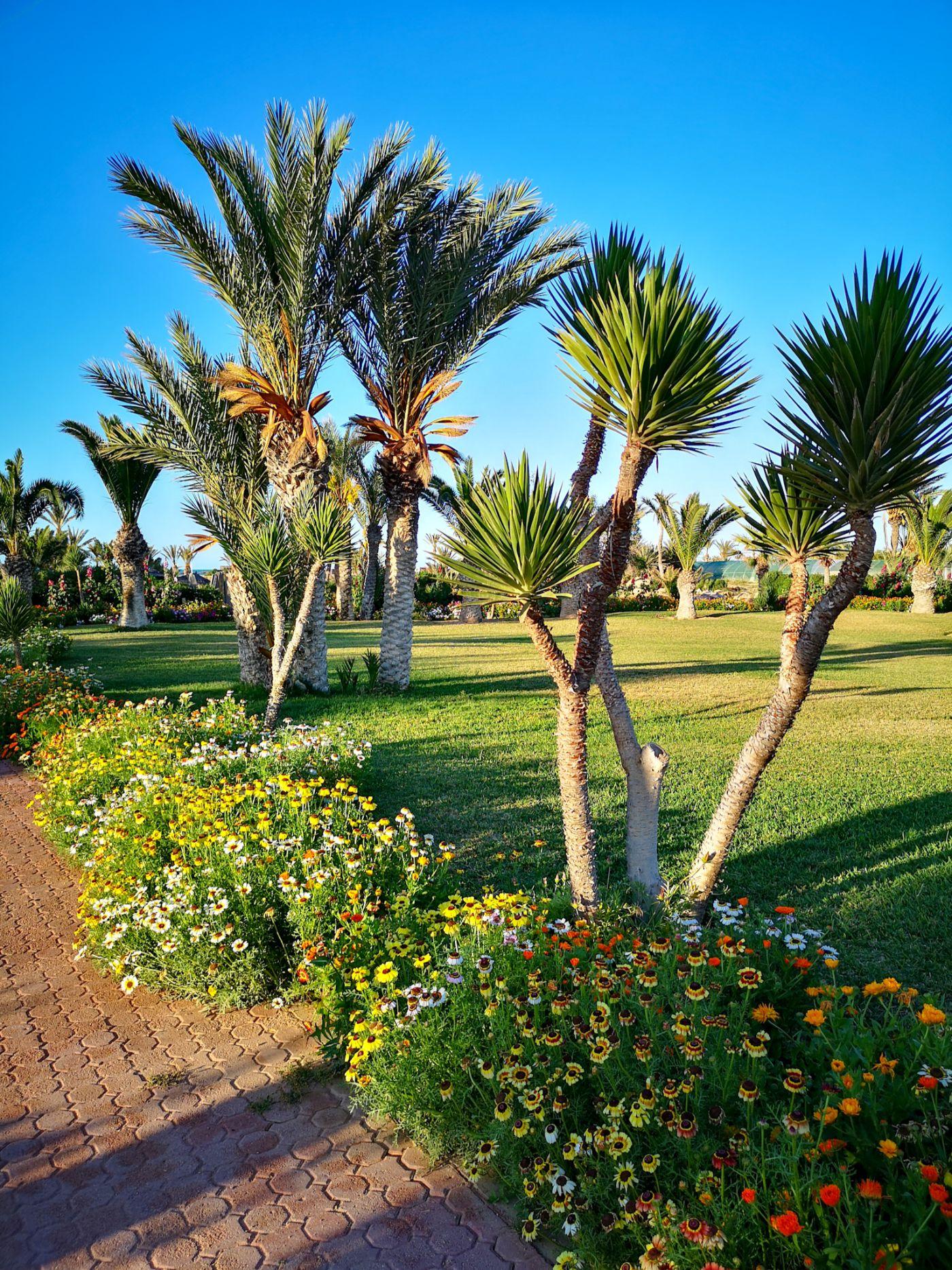 Hotel Royal Palace Djerba Tunezja ogród palmy
