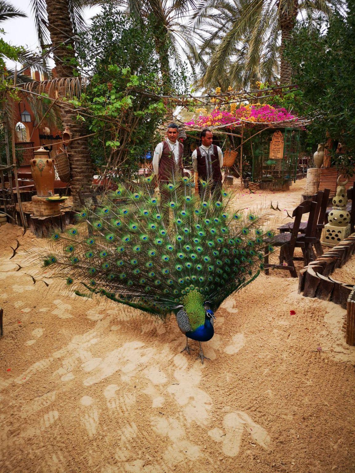 restauracja berberowie tunezja paw