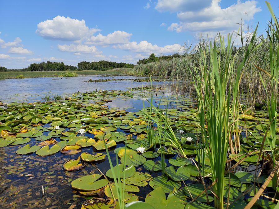 jezioro-moszna-dąb-dominik-poleski-park-narodowy-na-weekend
