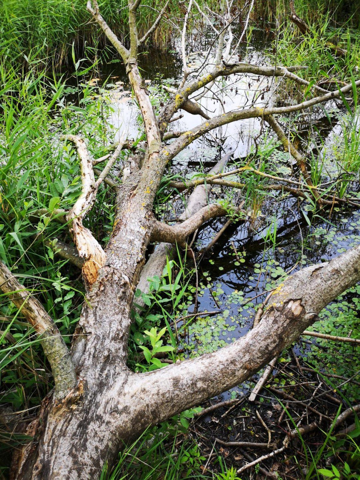 perehod drzewa bagna stawy natura lubelskie weekend zwiedzanie