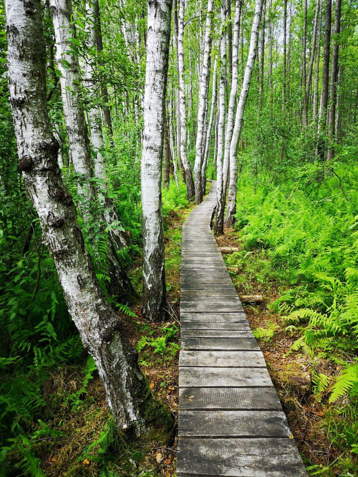 ścieżka spławy las grzozy kładka ścieżka zwiedzanie weekend lubelskie 2