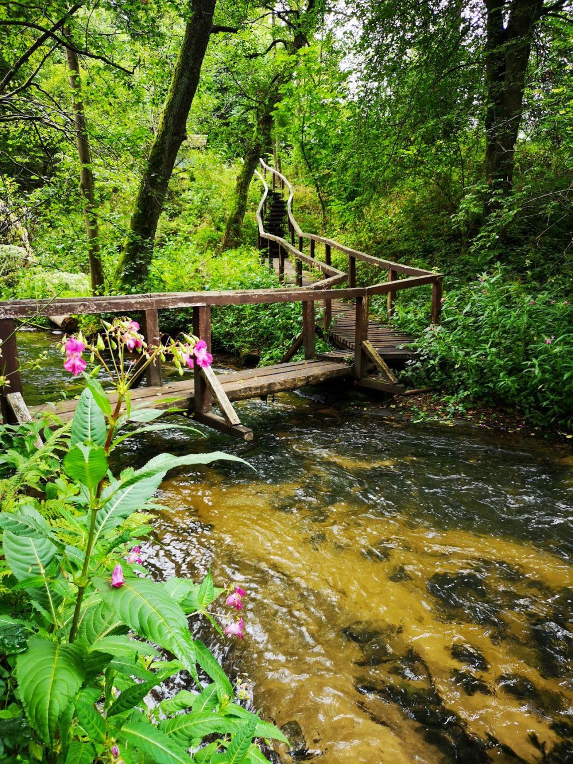 Czartowe Pole rzeka sopot kładka susiec roztocze na weekend co zwiedzić rezerwat