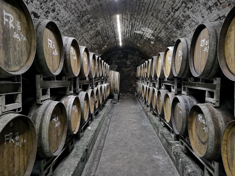 Jedlička winnica morawy południowe winiarnia piwniczka