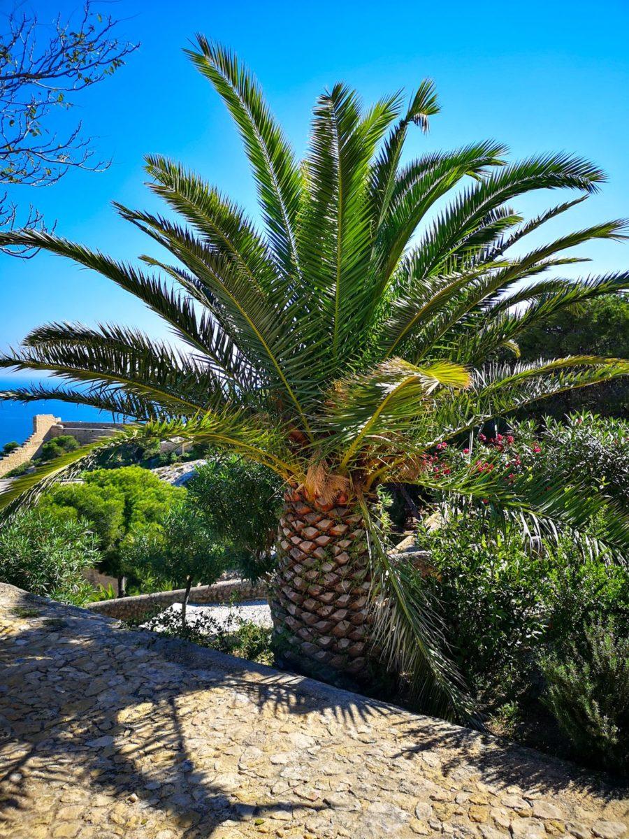 alicante roślinnośc hiszpanii palmy