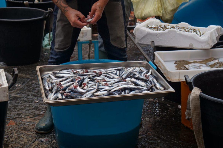 katania targ rybny