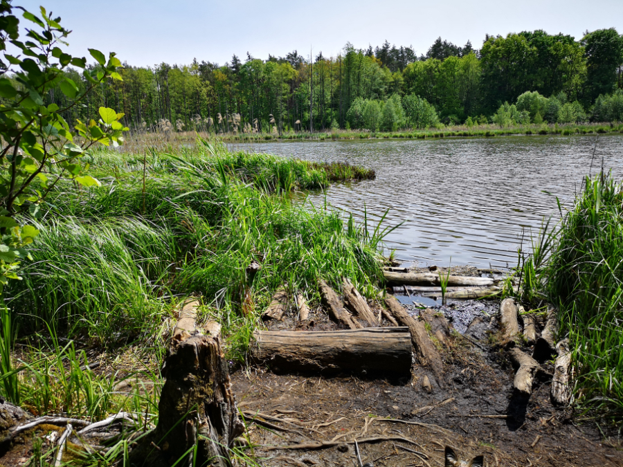 ścieżka przyrodnicza bobrówka lubelskie co zobaczyć z rodziną lubelszczyzna polska staw