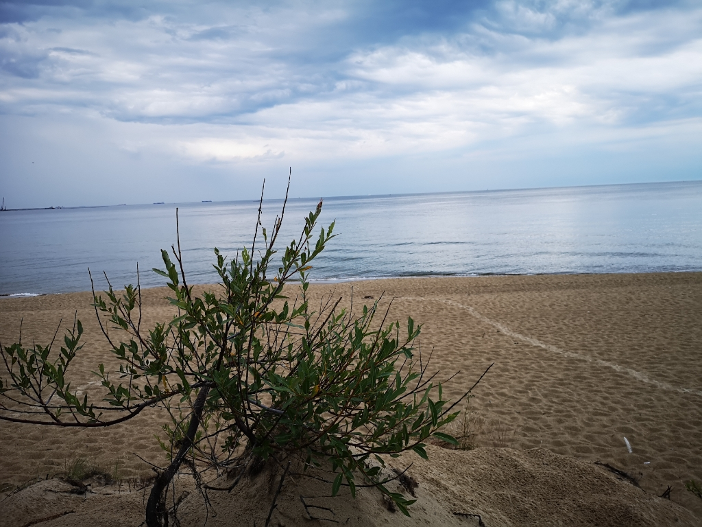 stogi plaża gdańsk