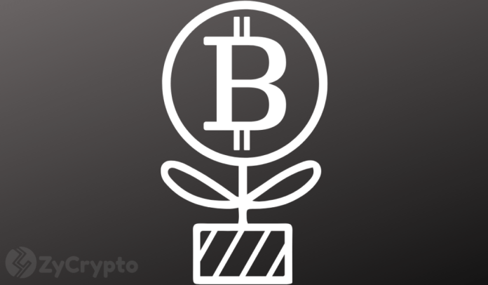 Miami Mayor Considers Investing In Bitcoin With Part Of City's Treasury Reserves