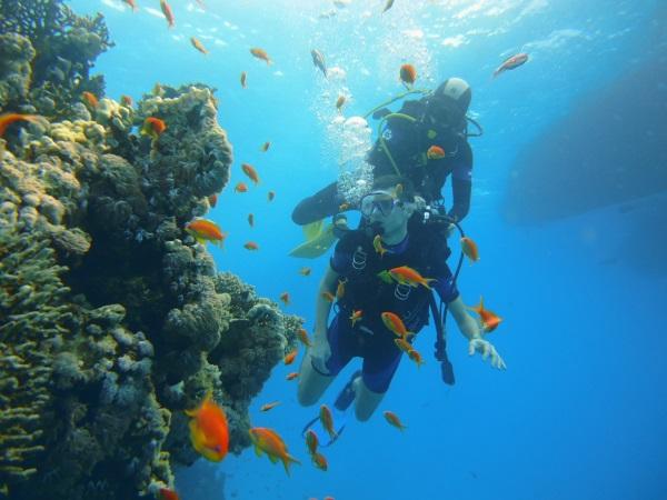 Nurkowanie przy rafie wyspy Tiran