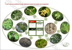 mangrov2