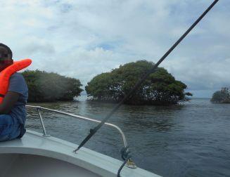 Ilots à mangrove au large de Morne à l'Eau