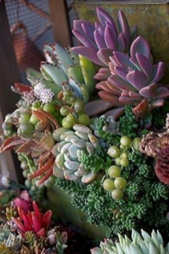Awesome Succulent Garden Ideas For 2018 19