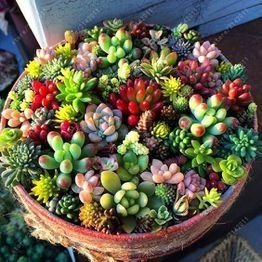 Awesome Succulent Garden Ideas For 2018 25