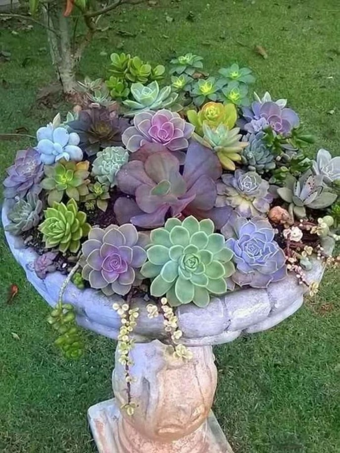 Awesome Succulent Garden Ideas For 2018 36