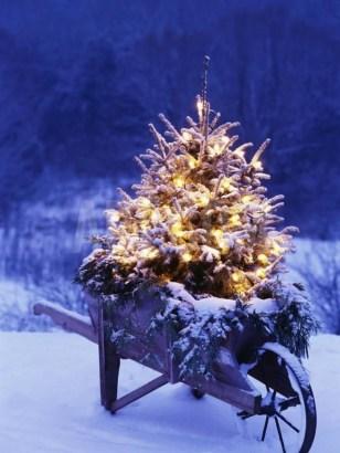 Extraordinary Outdoor Light Christmas Ideas 36