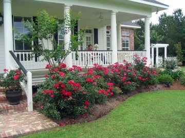 Pretty Colorful Winter Plants And Christmas For Frontyard Decoration Ideas 10