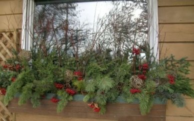 Pretty Colorful Winter Plants And Christmas For Frontyard Decoration Ideas 39