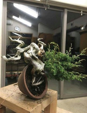 Brilliant Bonsai Plant Design Ideas For Garden01