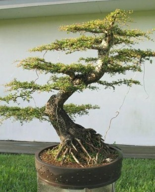 Brilliant Bonsai Plant Design Ideas For Garden03