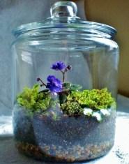 Brilliant Bonsai Plant Design Ideas For Garden13