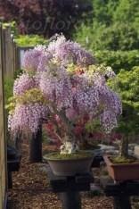 Brilliant Bonsai Plant Design Ideas For Garden14